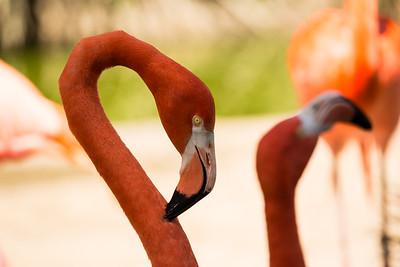 Zoo Visit San Diego  3 19 2016 w Rose B