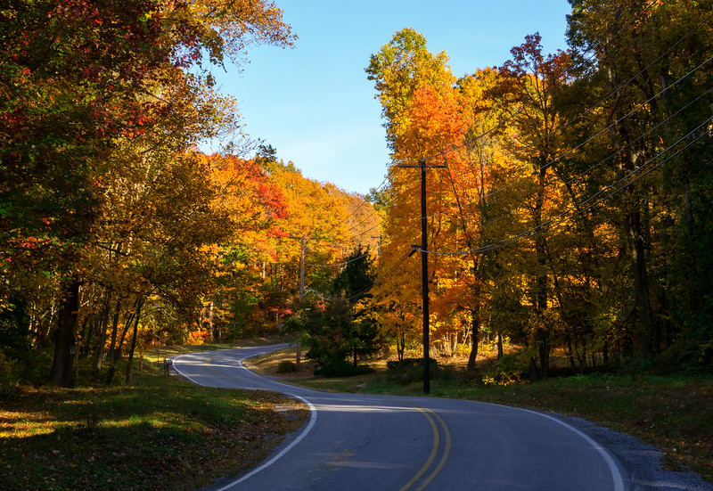 autumn 2015 - ranck road curves foliage(p).jpg