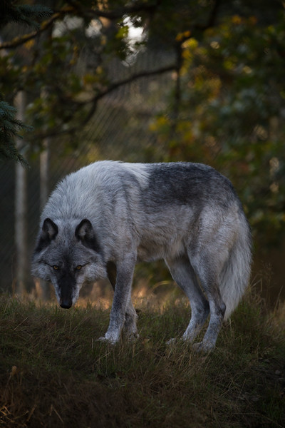WolfHaven (20 of 31).jpg