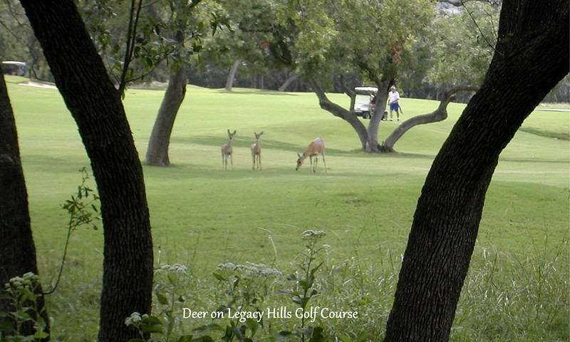 06-Deer on Legacy Hills Golf Course.jpg