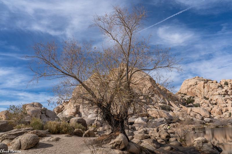 Chuck Harris Joshua Tree
