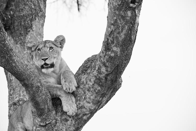 Uganda_T_QE-1291.jpg