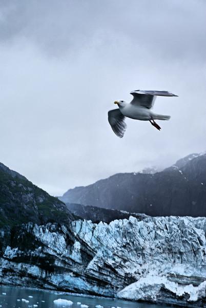 A200 Glacier Bay_64B.jpg