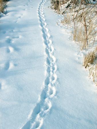 20060208 Mammal Tracks & Sign