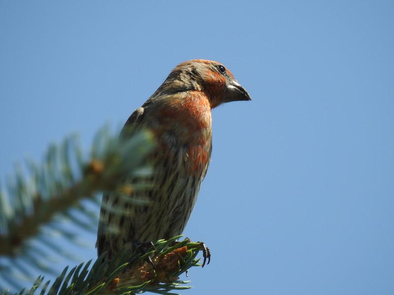 birds (106).JPG