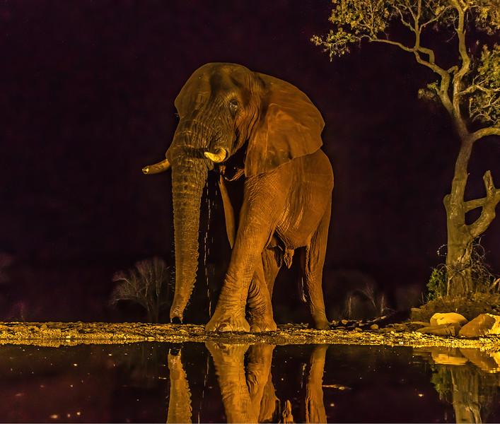 Elephant NH 244 x 207 300 dpi DONE NOISE 3061.jpg