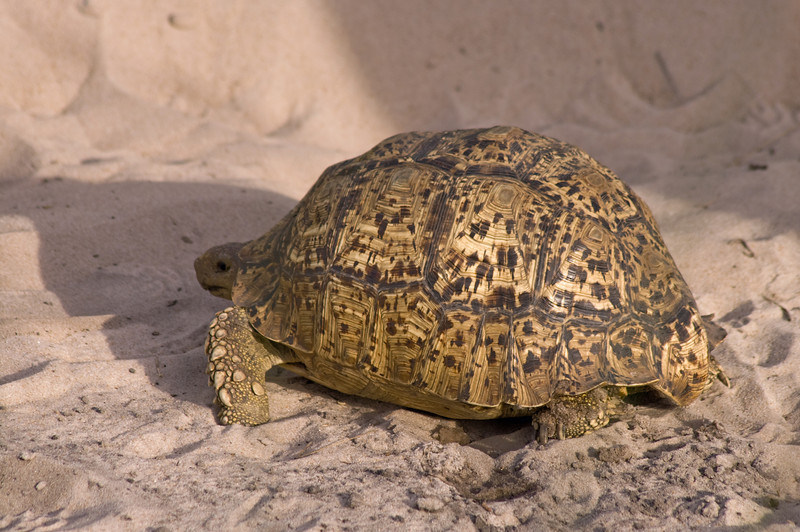 "Tortoise beats a ""hasty"" retreat"