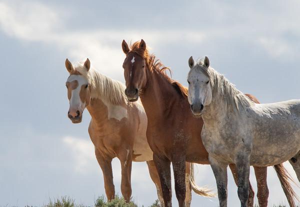 Colorado Wild Horses