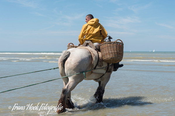 Shrimp fishermen on horseback