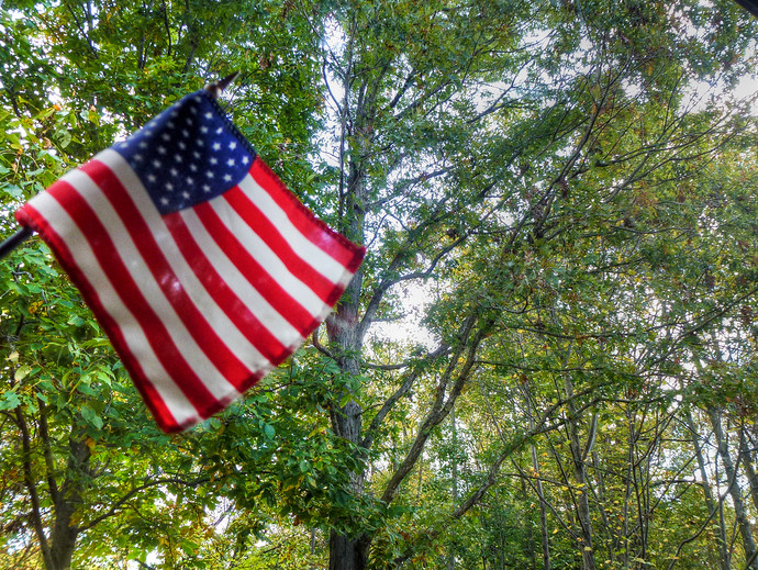 american flag forest background