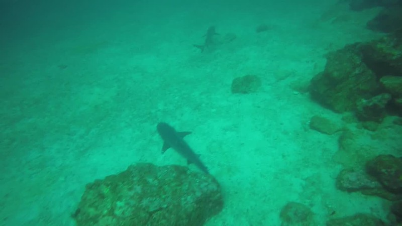 Diving Coiba National Park