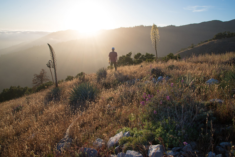 Spring on the high grassy slopes in the Ventana Wilderness near Big Sur.