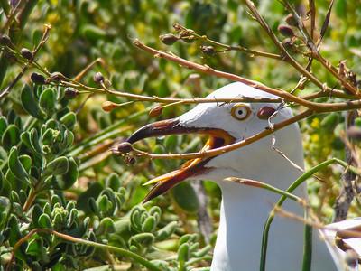 Rockingham Area, Western Australia
