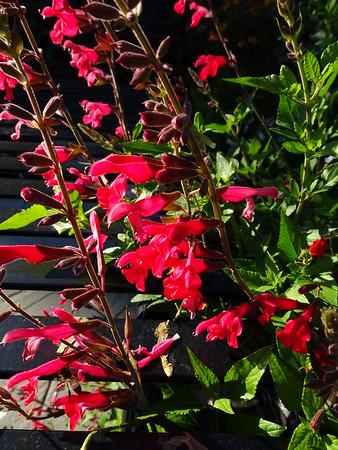 Knight Hall Pollinator Garden, October 3, 2020