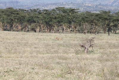 Nakuru Kenya July 2010