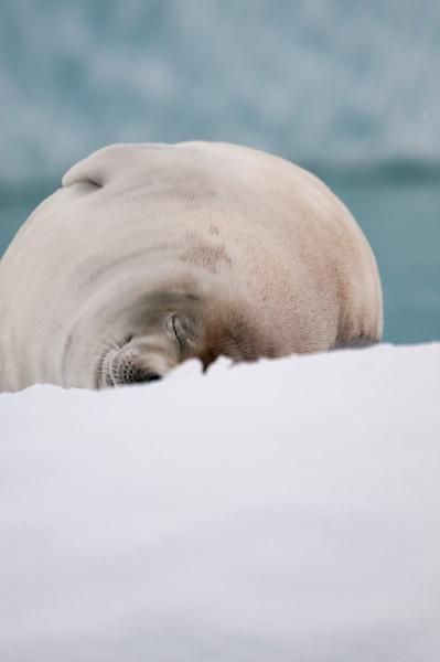 Antarctica 2015 (40 of 99).jpg
