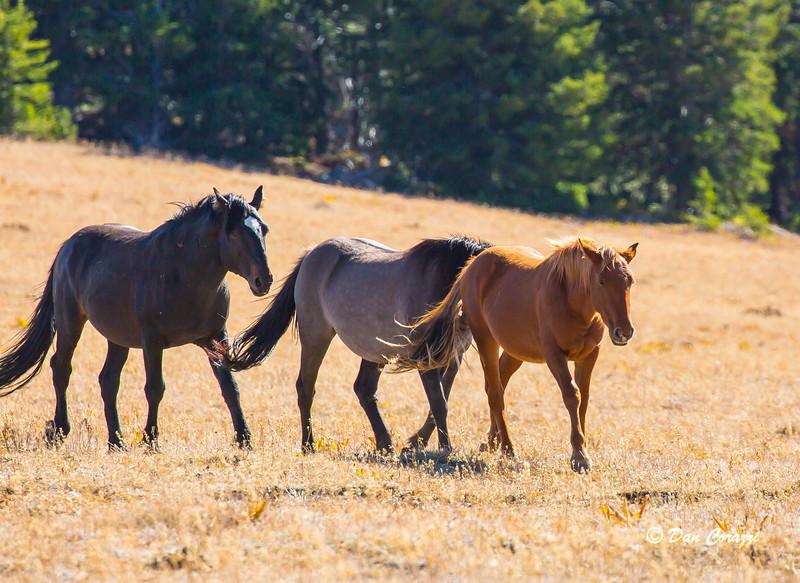 Walking Mustangs 7-1a.jpg