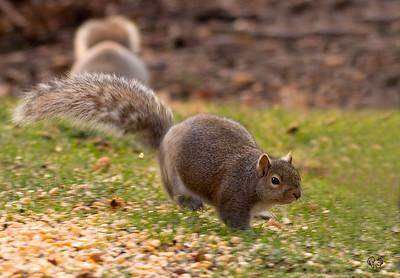 Squirrels 2007