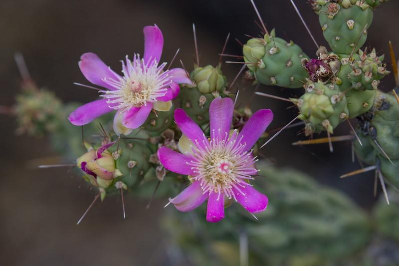 cacti flower-4127.jpg