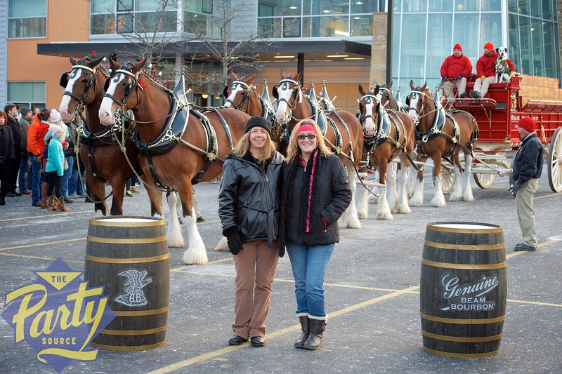 Clydesdale Portraits 286.jpg