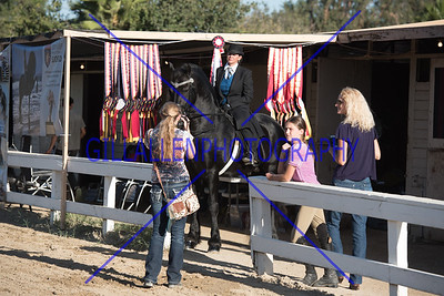 International Friesian Horse Show (IFSHA)