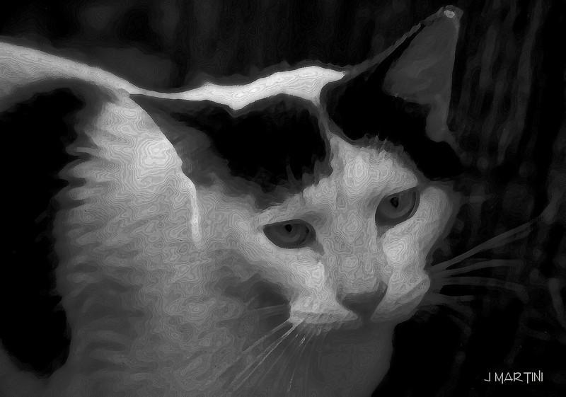 cat 8-13-2007.jpg