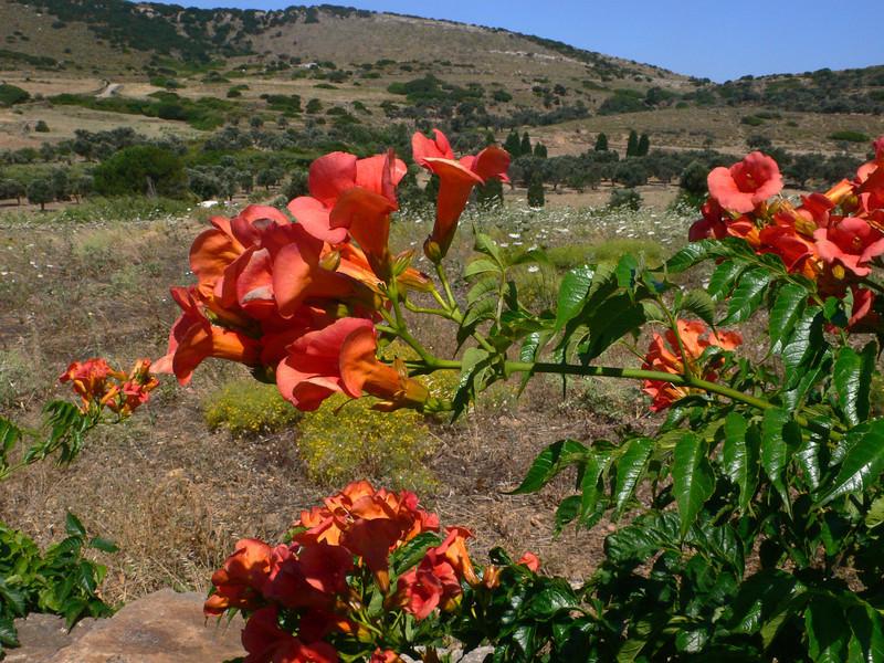 Greece - June 2011 293.JPG