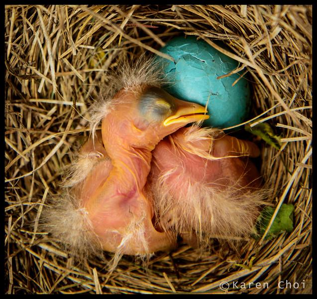 baby birds 3 small.jpg