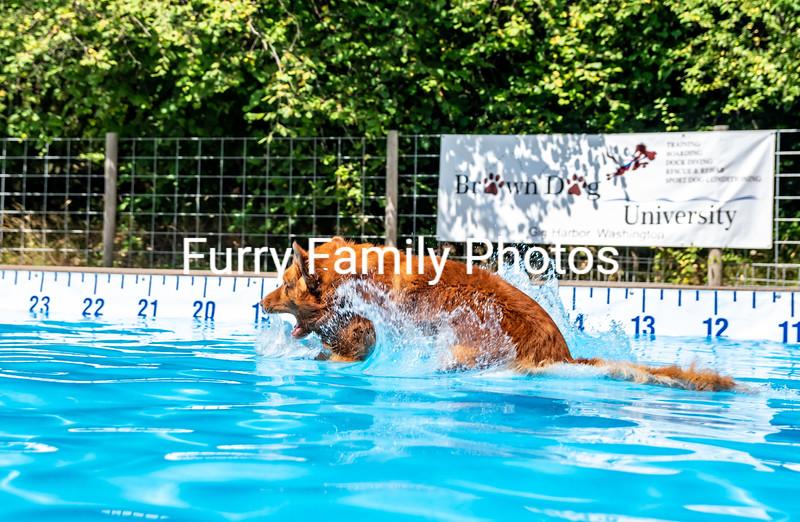 Brown Dog University Mid Summer Splash July 2018 Trials