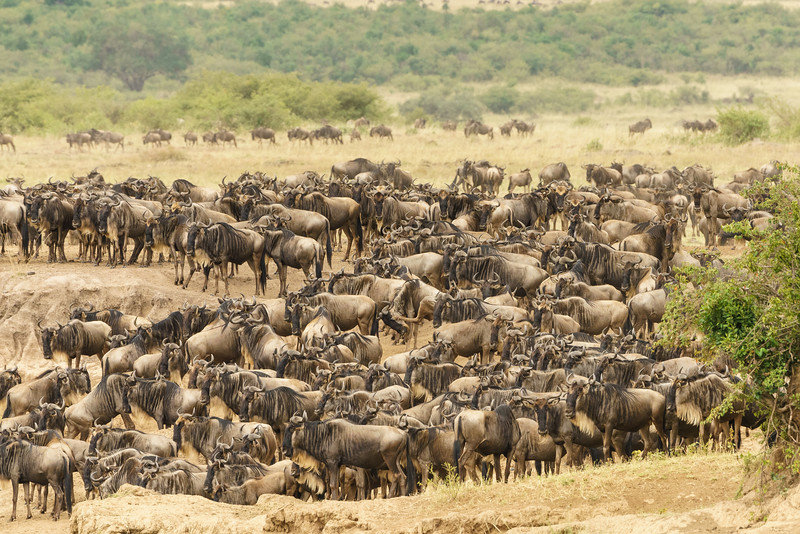 Kenya 2015-05724.jpg