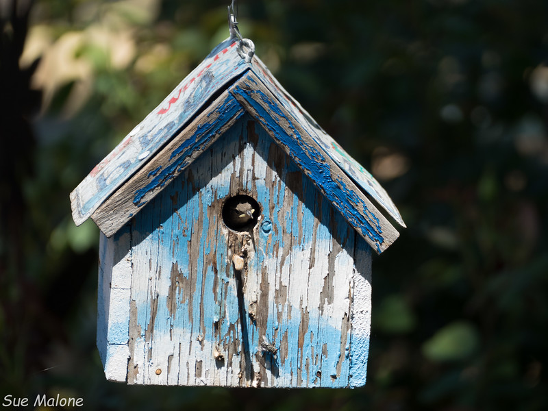 Little Bird in the Bel House-7.jpg