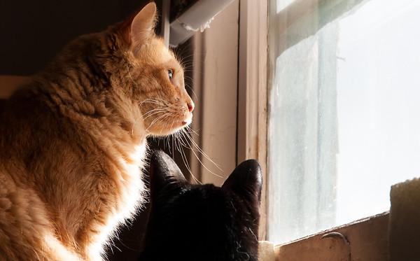 Cat Sitting Simba and Tara 12/1/2012
