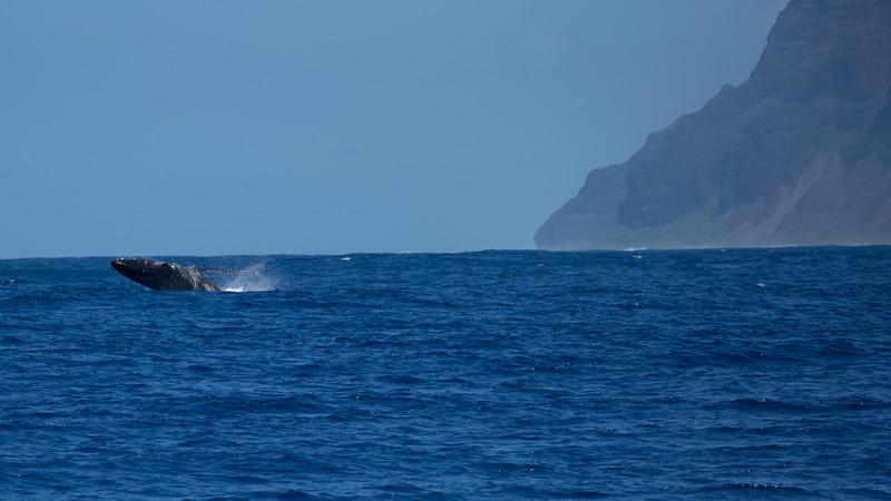 whales-leila-50.jpg