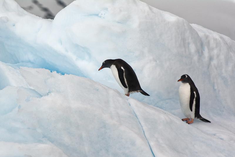 Zwei einzelne Pinguine auf einer Eisscholle.