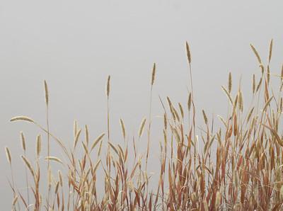 Helderberg Fog in Fall