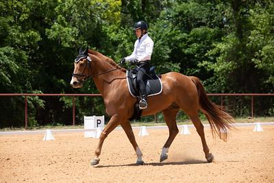 Horse 239