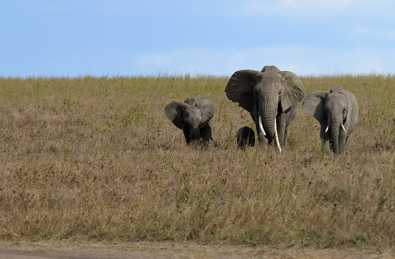 A-small-Elephant-Family.jpg