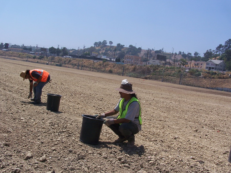 July 2005As part of the land preparation for the Not-A-Cornfield project by Lauren Bon, rocks were picked by hand, collected in cans and taken away.