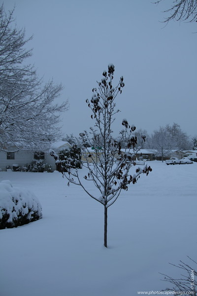 Let it Snow: 2010