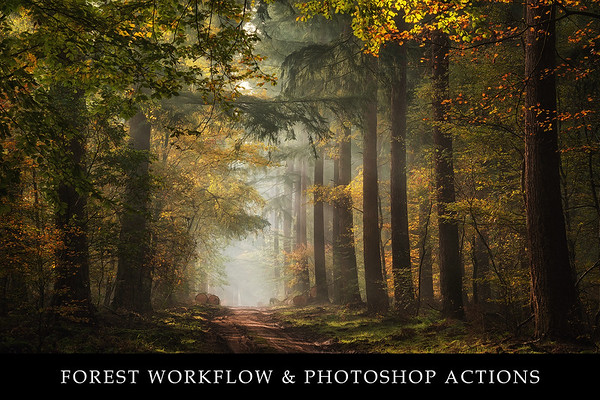 Forest workflow and Photoshop actions