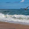 SeagullsDamNeck-004
