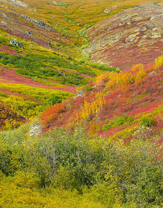 Denali National Park_Alaska