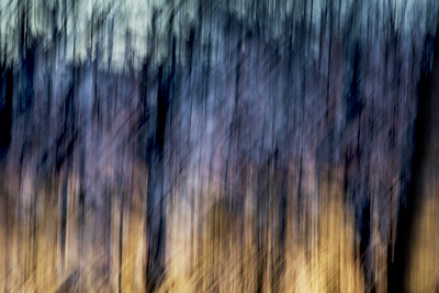 Tree Abstracts