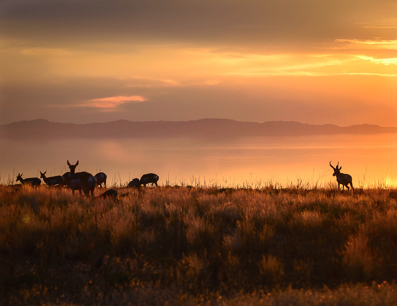 Antelope Sunset