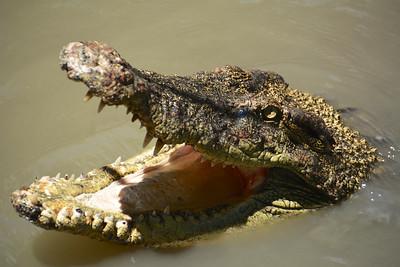 2015 Mekong Delta Wildlife Trip
