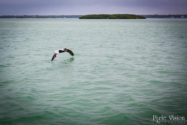 Dolphin Cruise with Johanna ~ 2/26/14