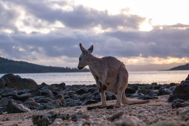 Australia_490.jpg