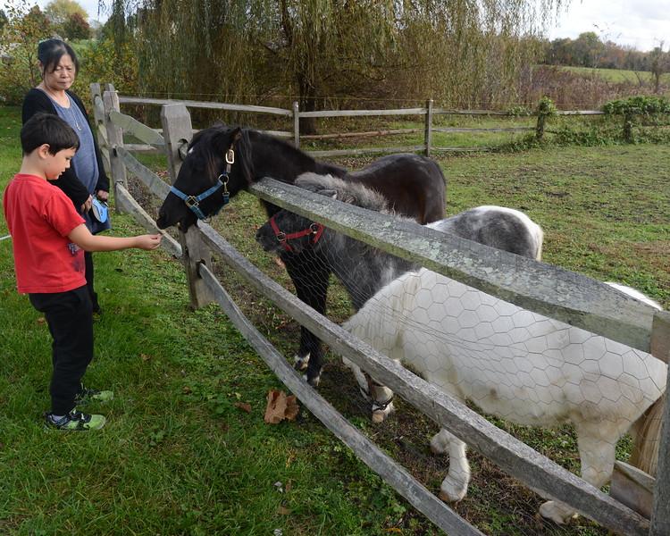 Grandma Gabe ponies.JPG