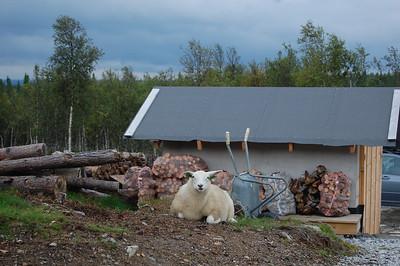 Vinter og sommer på hytta