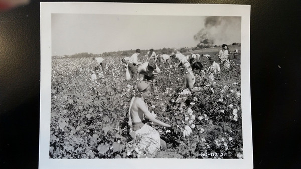 1942 Cotton Picking Students